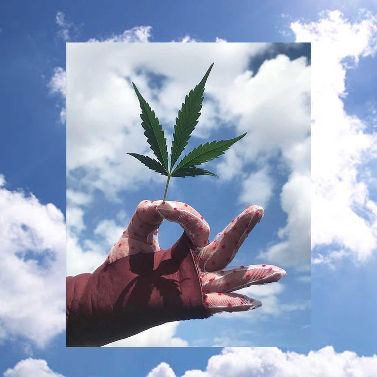 Le VRAI/FAUX (et le pourquoi pas) du cannabis et du CBD