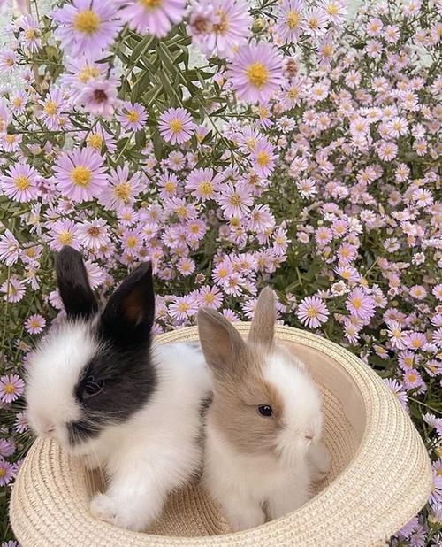 04/11 - Mood lapins